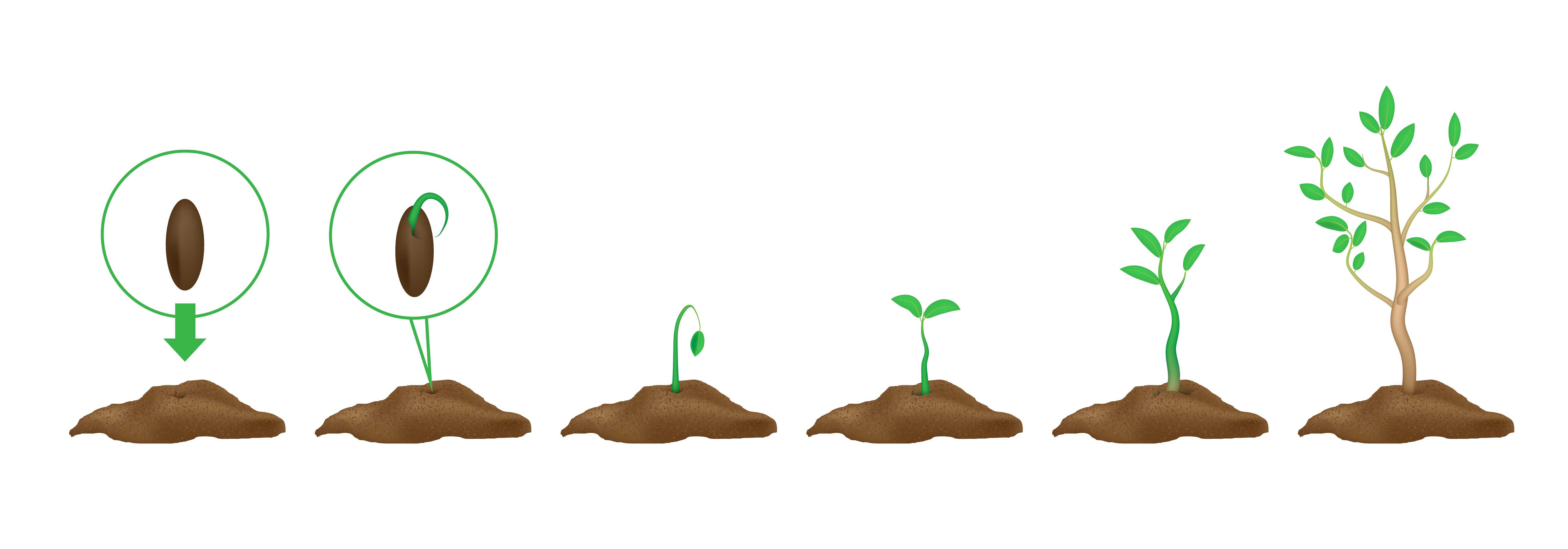 market grow